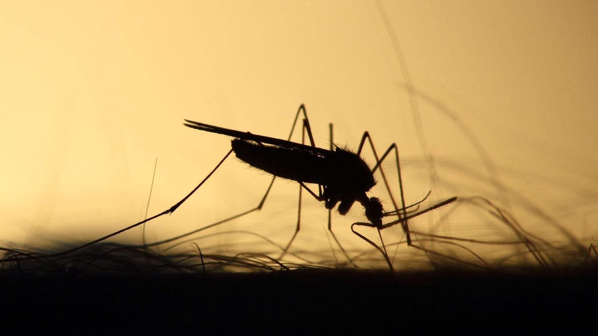 5 Best Mosquito Killer Machines In India